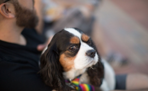 Close up of a cute dog being held by its owner during movie night at High Park Master Mechanic