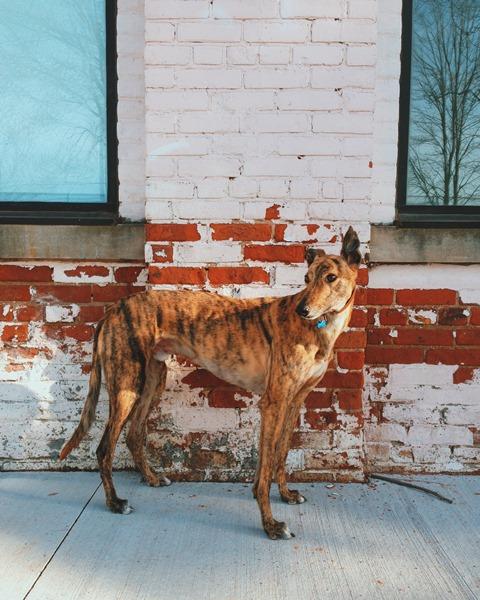 Dog Winner 1